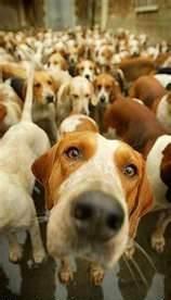 10w40 vs.15w50-dogs-following.jpg
