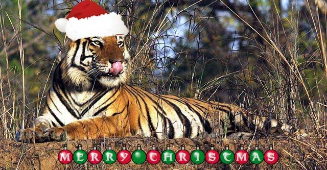 Merry Christmas And Happy Holidays Triumph Forum